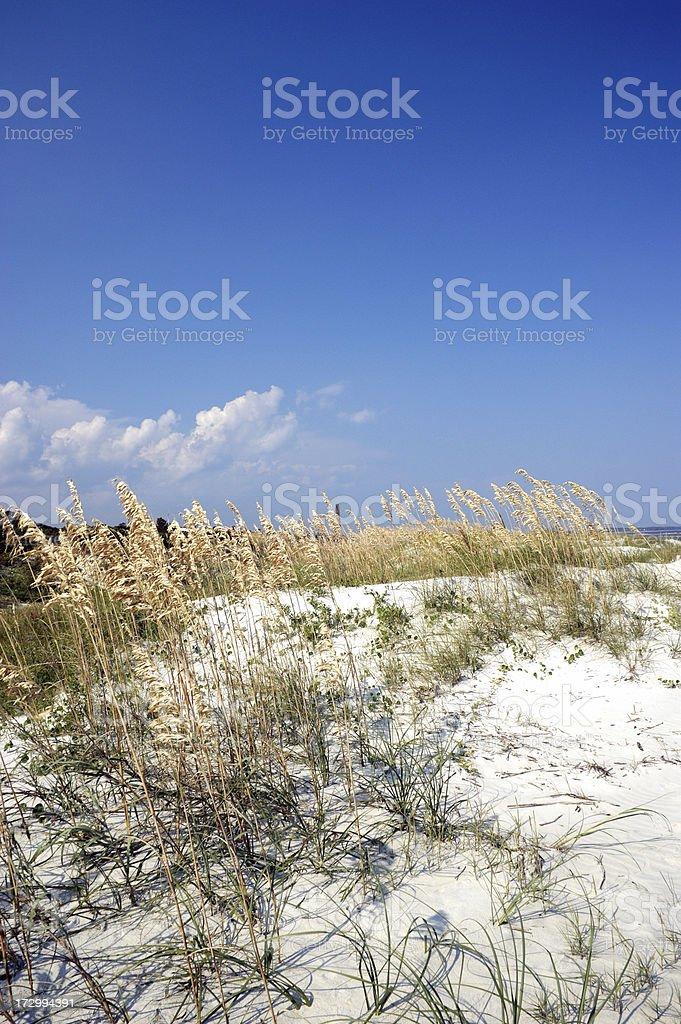 Dune on St. Simon Island Georgia stock photo