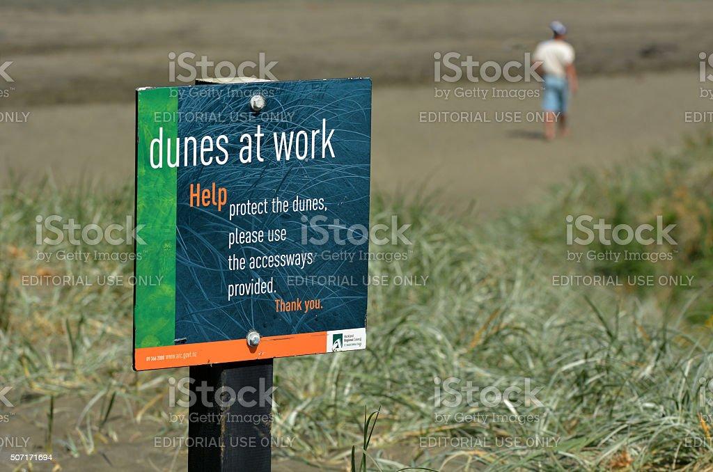 Dune restoration Muriwai beach New Zealand stock photo