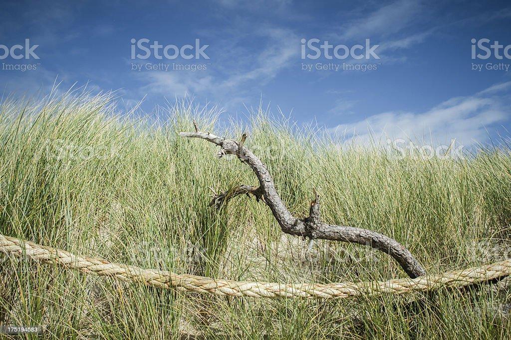 Dune stil-life stock photo
