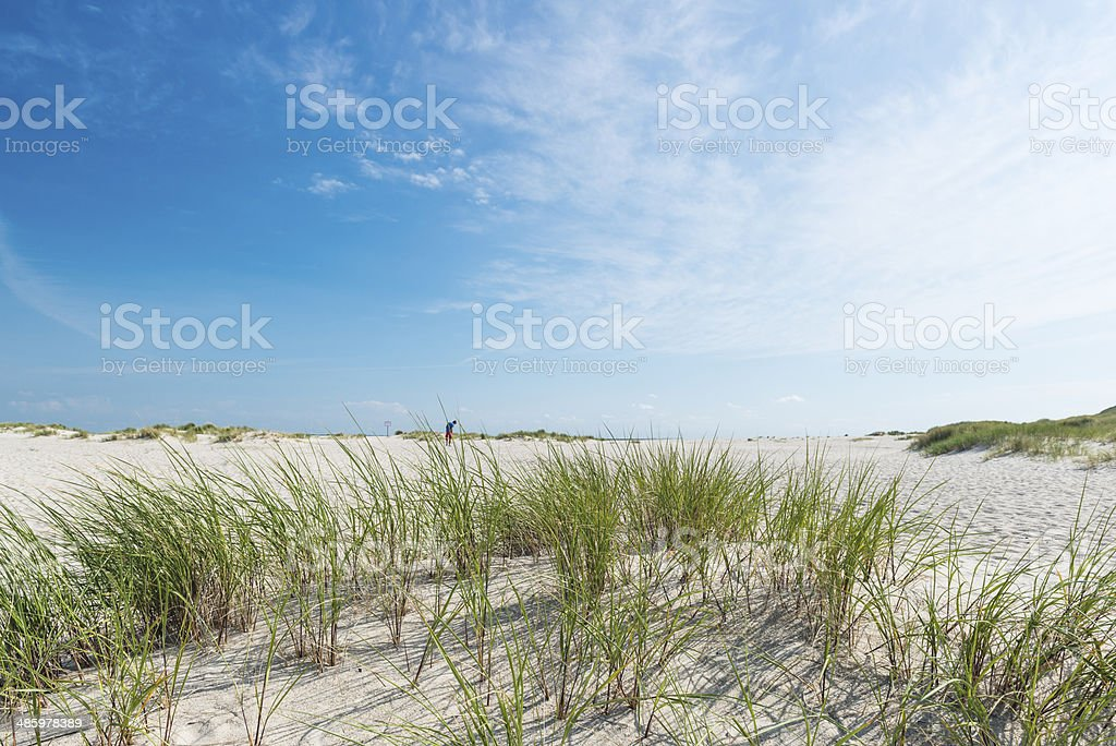 Dune with beach grass in the foreground. stock photo