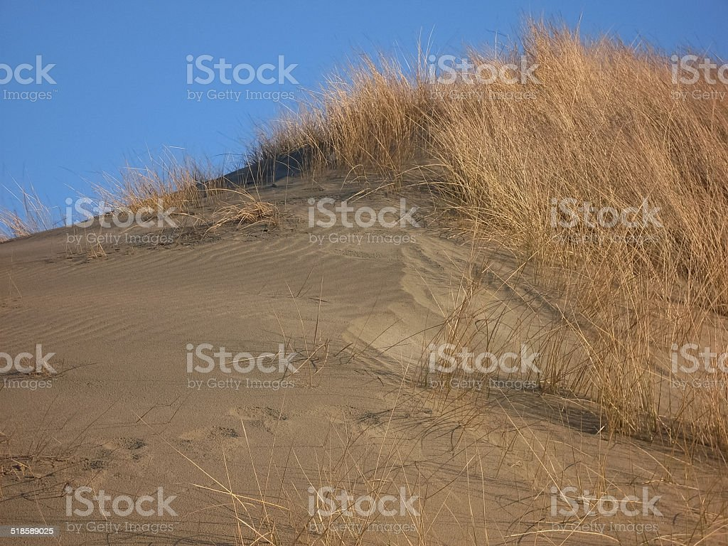 Dune with gras in Holland royalty-free stock photo