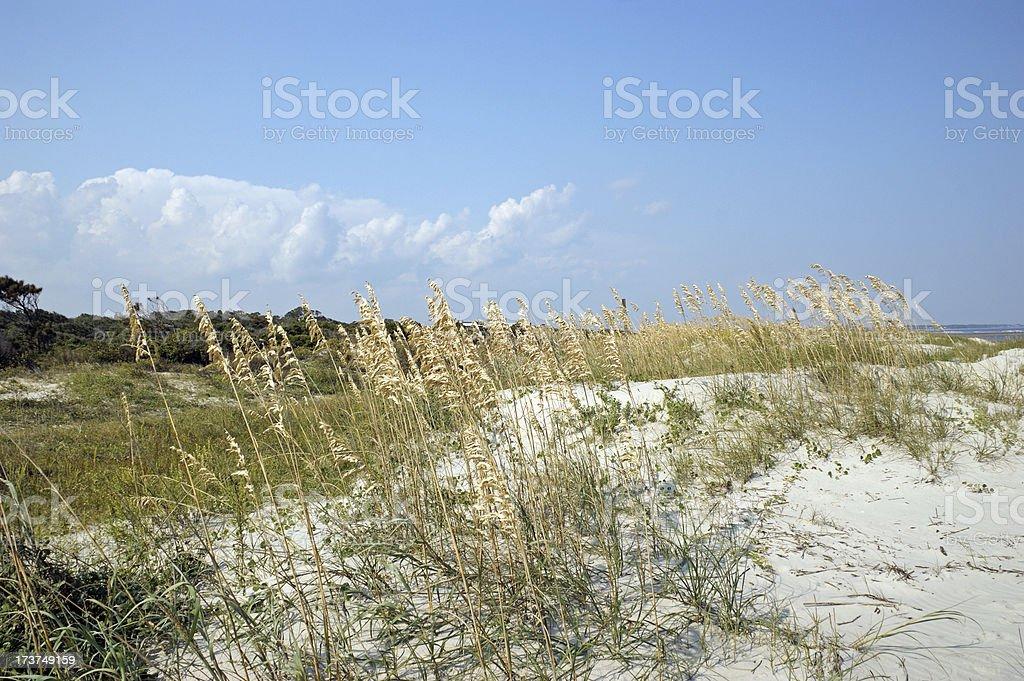 Dunes and Golden Grasses St. Simon's Island stock photo