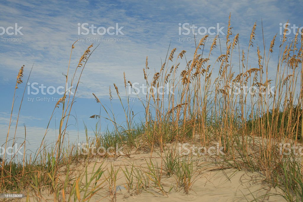 Dunes and Oats royalty-free stock photo