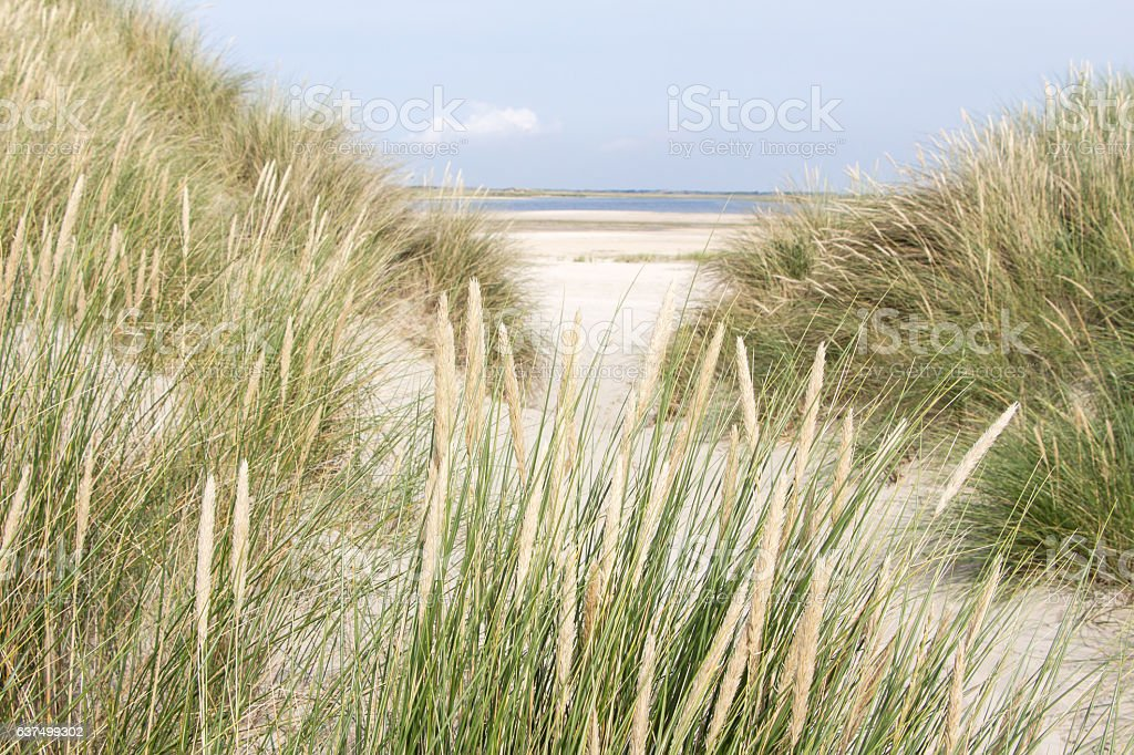 Dunes and sea in the Netherlands stock photo