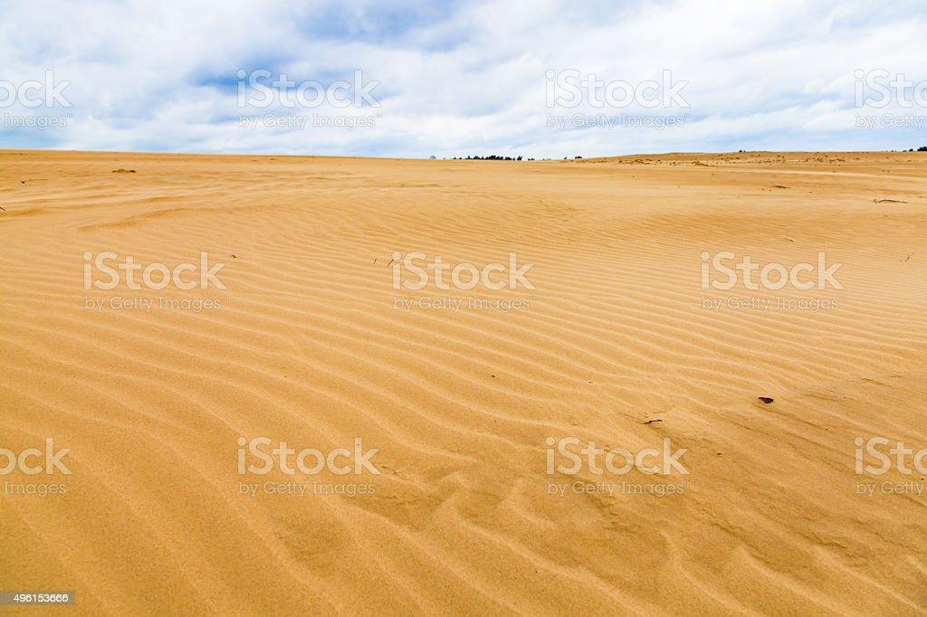 Dunes at the Hoge Veluwe National Park stock photo