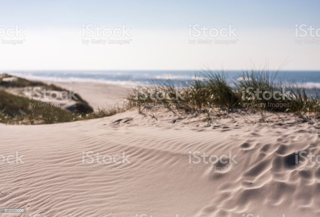 Dunes by the Beach stock photo