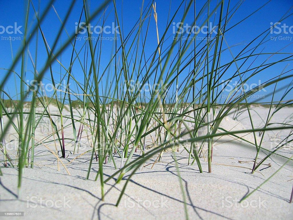 Dunes, hierba y arena foto de stock libre de derechos