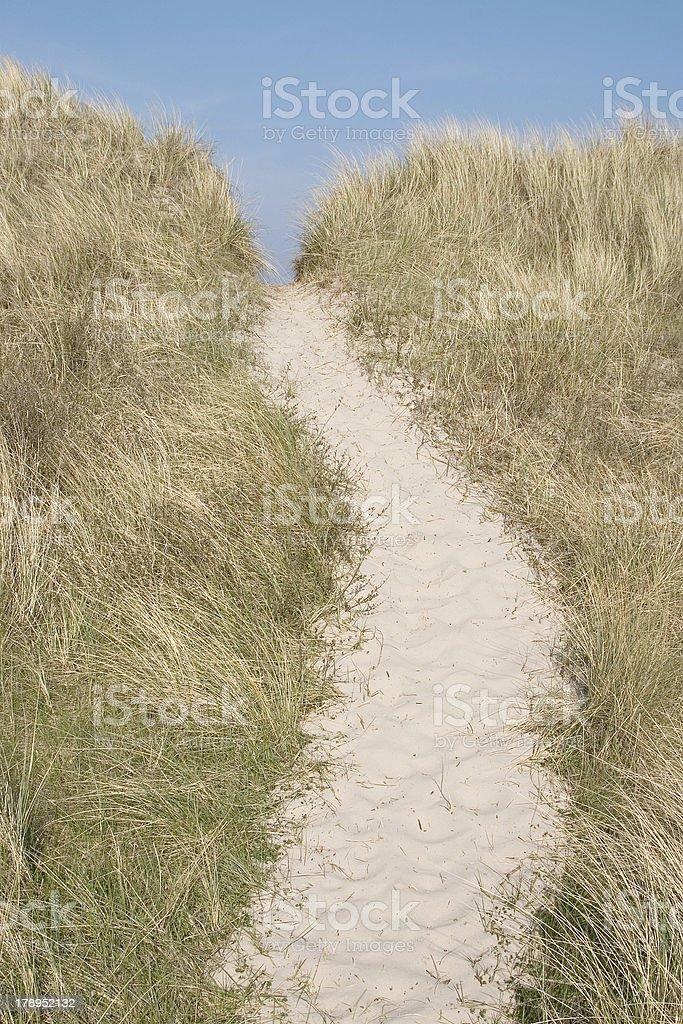 Dunes near Schoorl (the Netherlands) stock photo