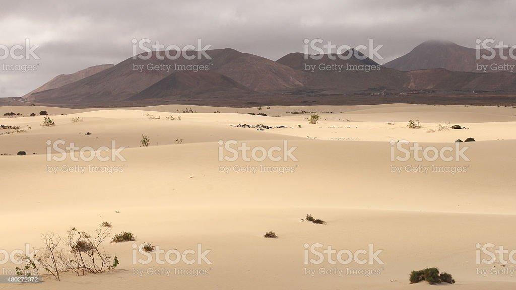 Dunes of Corralejo royalty-free stock photo