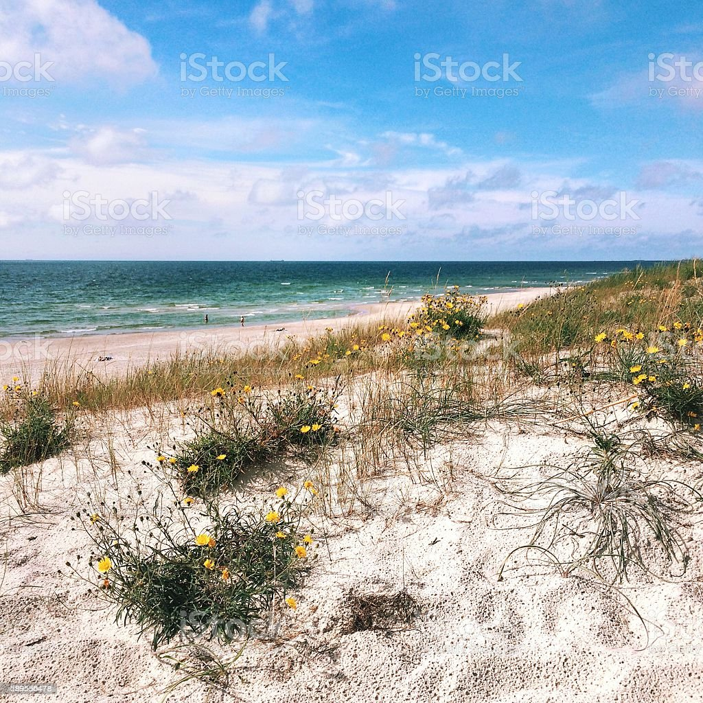 Dunes on beach in Klaipeda, Lithuania stock photo