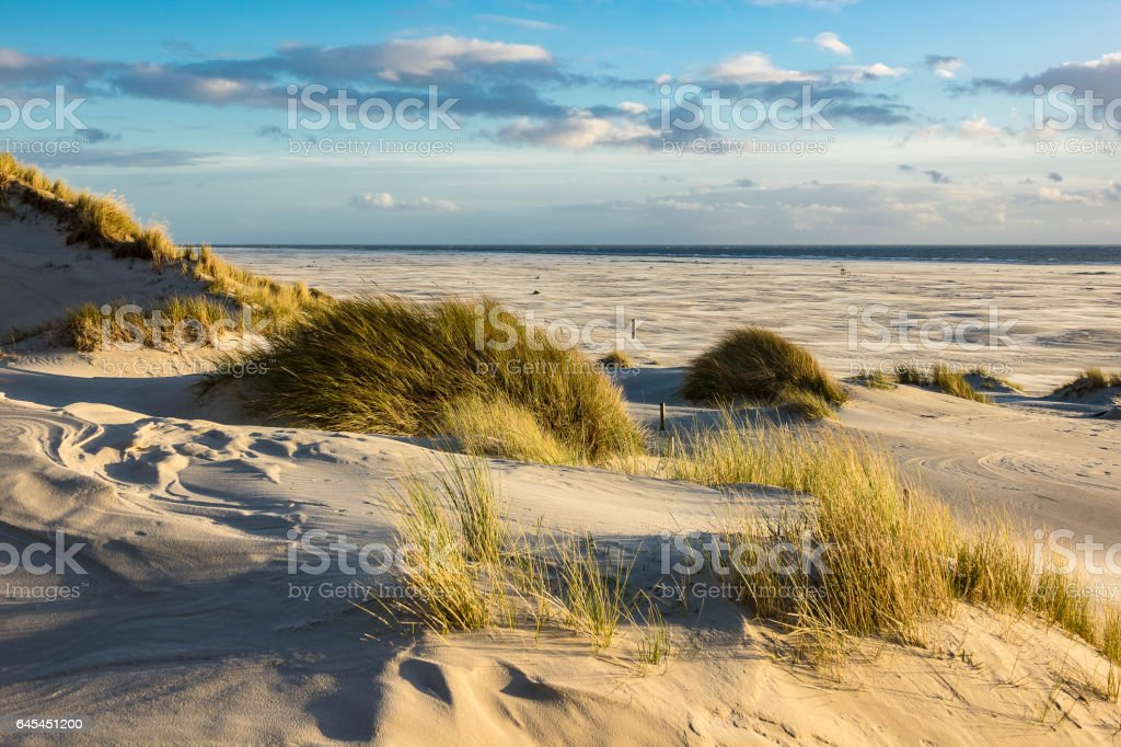 Dunes on the North Sea coast on the island Amrum stock photo