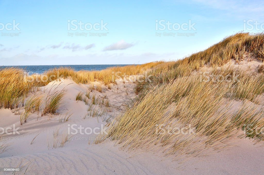 Dunes on the North Sea coast stock photo