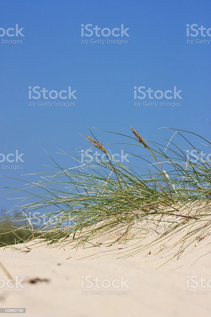 dunes Lizenzfreies stock-foto