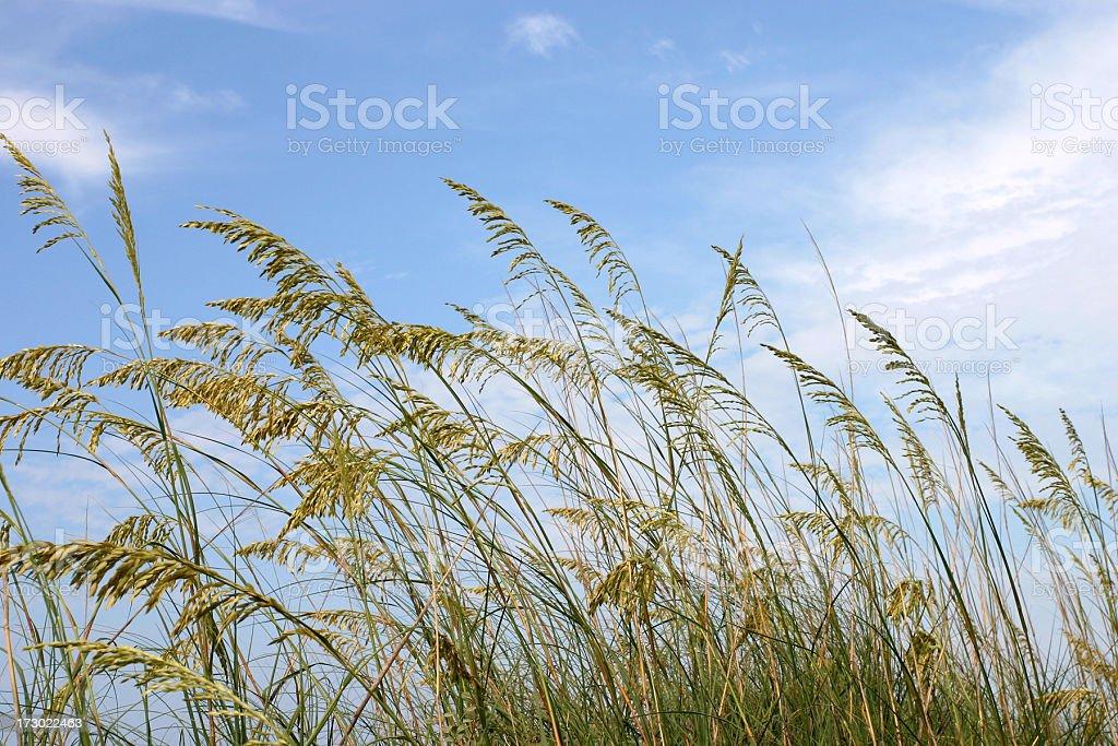 Dunes Sea Oats & Sky stock photo