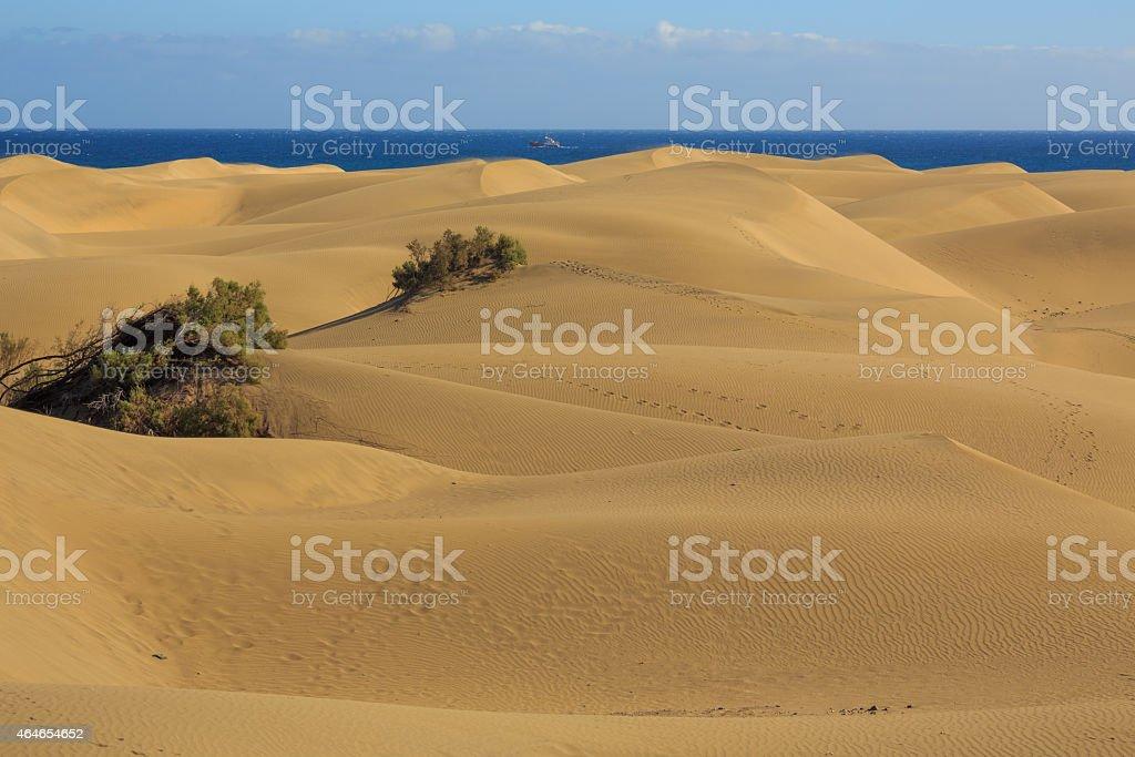 dunes with ocean stock photo
