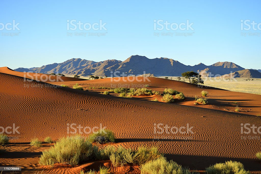 Dunes without any footprint royalty-free stock photo