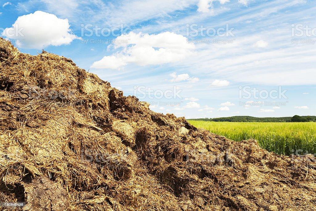Dung heap in a field in summer stock photo