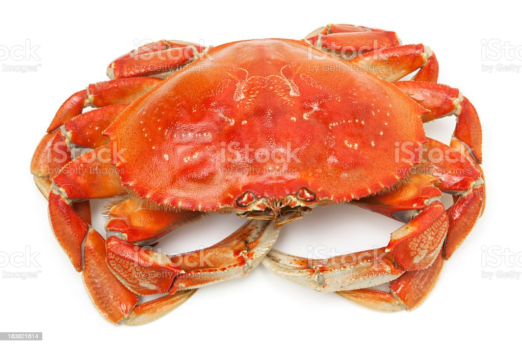Dungeness crab stock photo
