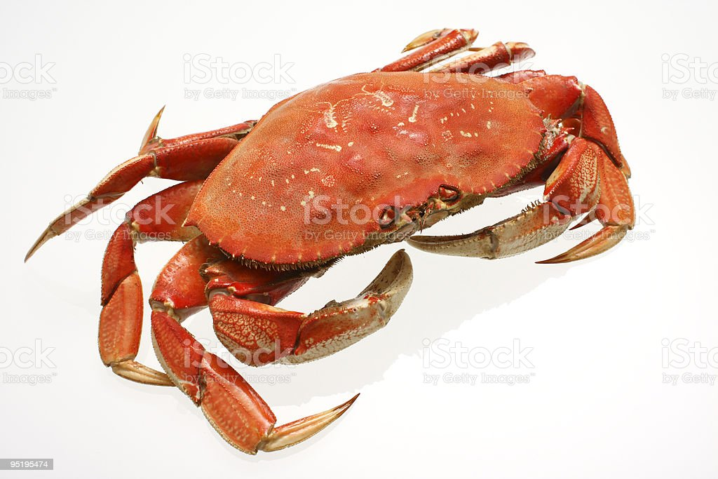 dungeness crab royalty-free stock photo