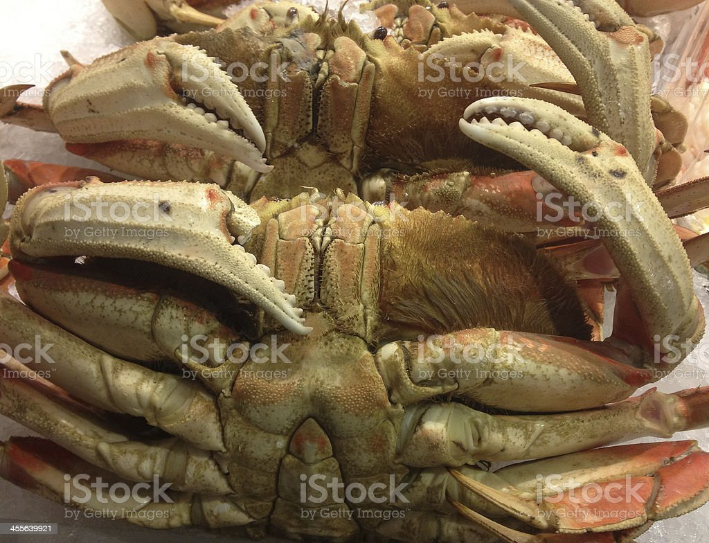 Dungeness Crab Up Close stock photo