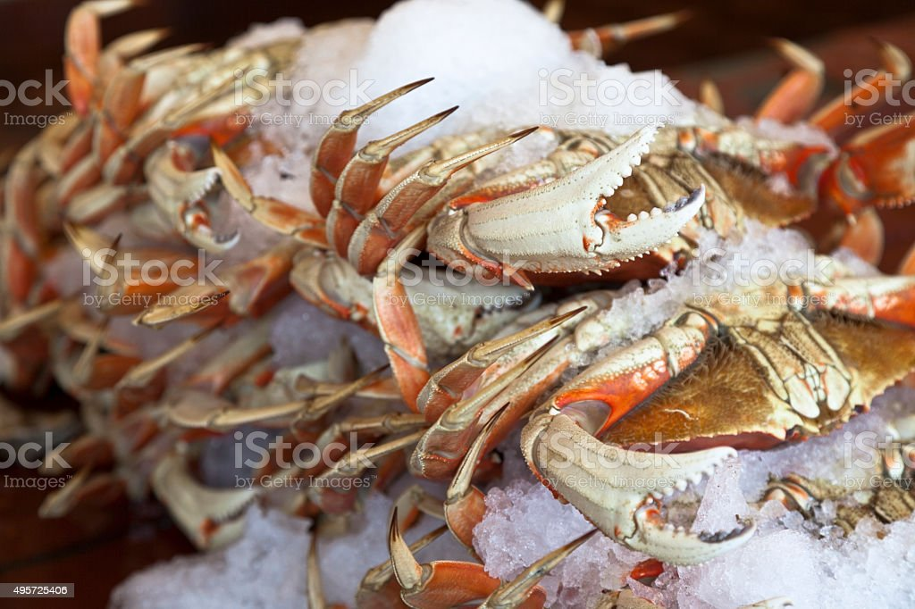Dungeness Crabs on Ice stock photo