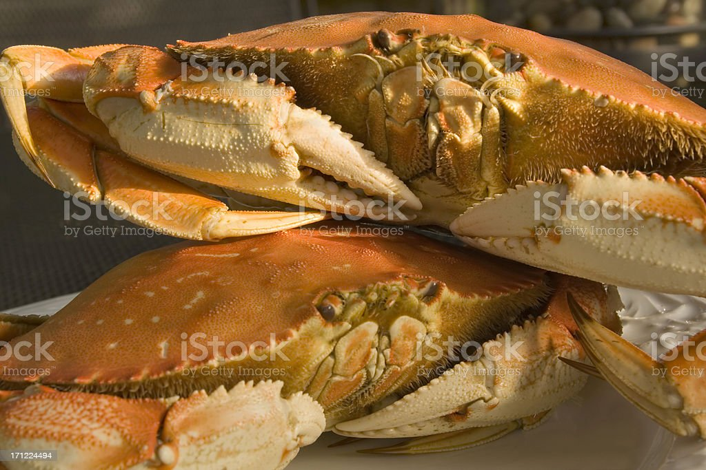 Dungeness Crabs stock photo