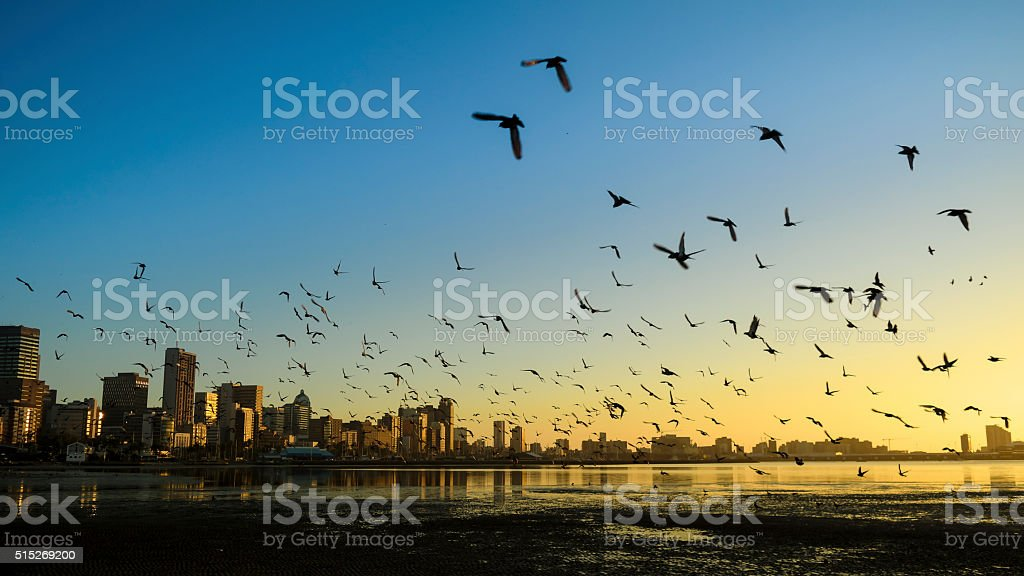 Durban Harbor with birds flying over stock photo