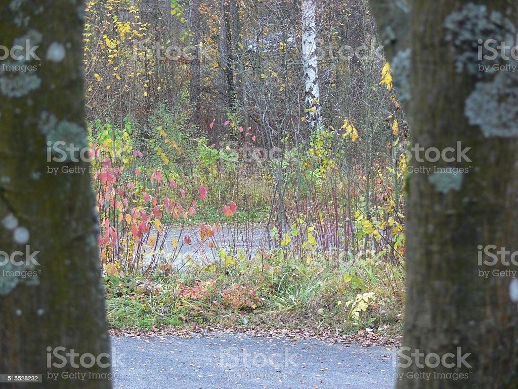 Durchblick in den Herbstwald. stock photo