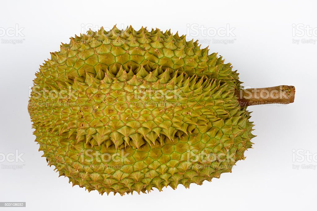 Durian fruit from Durian Tree stock photo