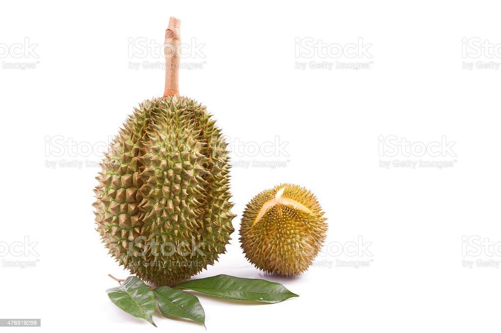 Durian fruit of THAILAND. stock photo