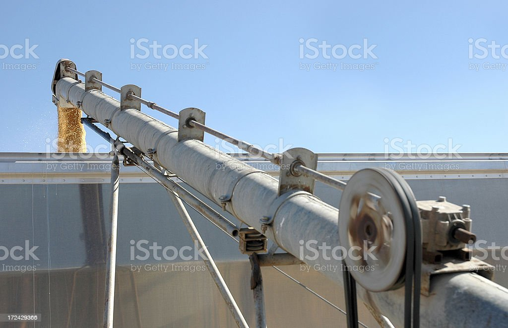 Durum Wheat and auger royalty-free stock photo
