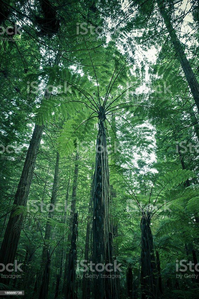 Dusk Forest Ferns stock photo