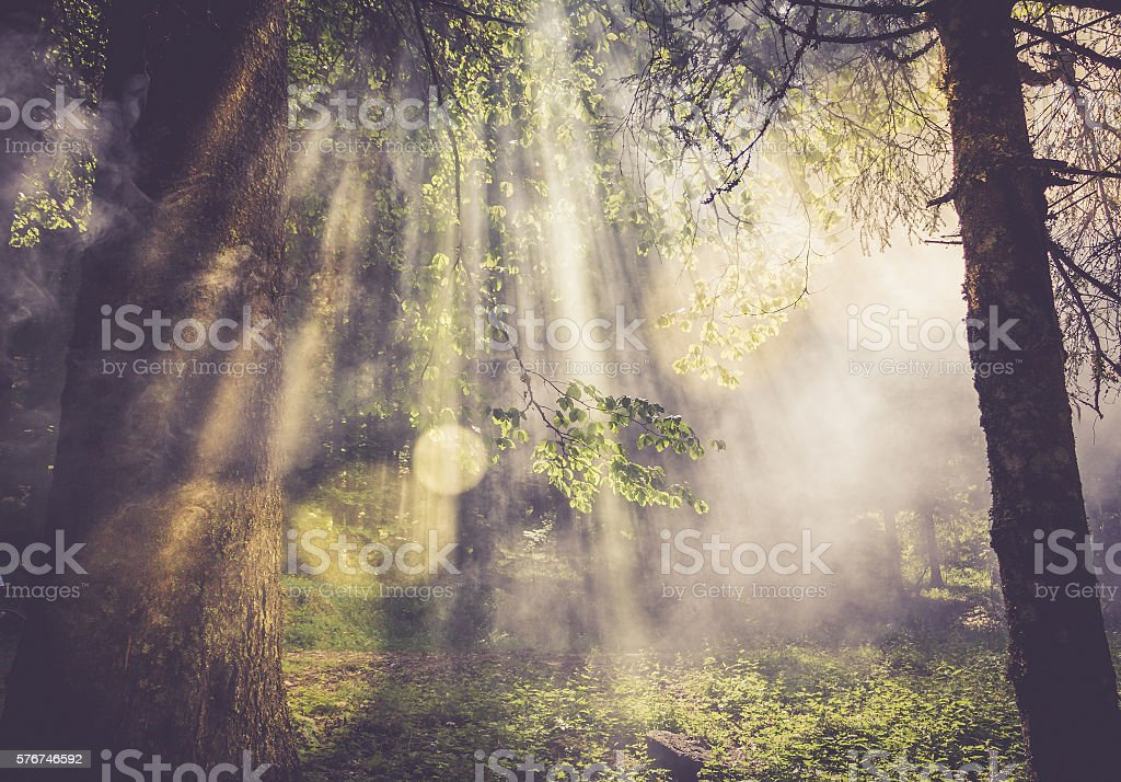 Dusk in forest stock photo