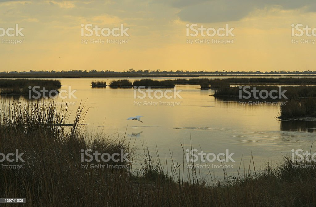 Dusk on a marsh with a low flying dragonfly stock photo