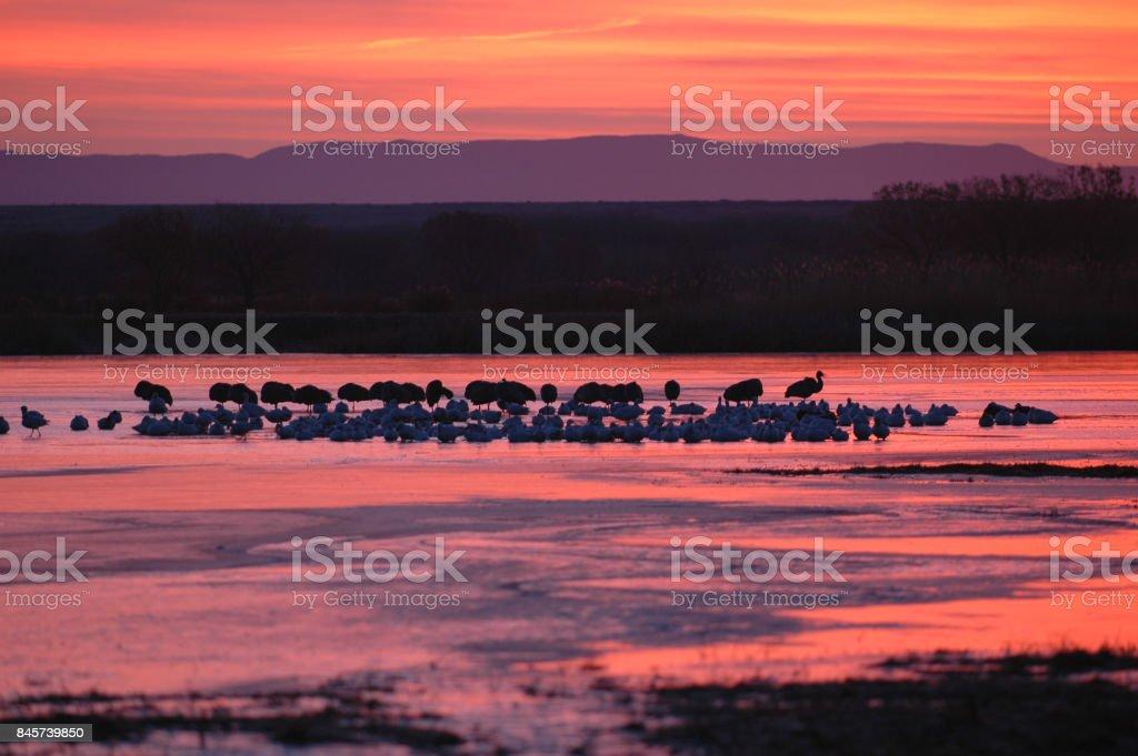 Dusk On The Refuge stock photo
