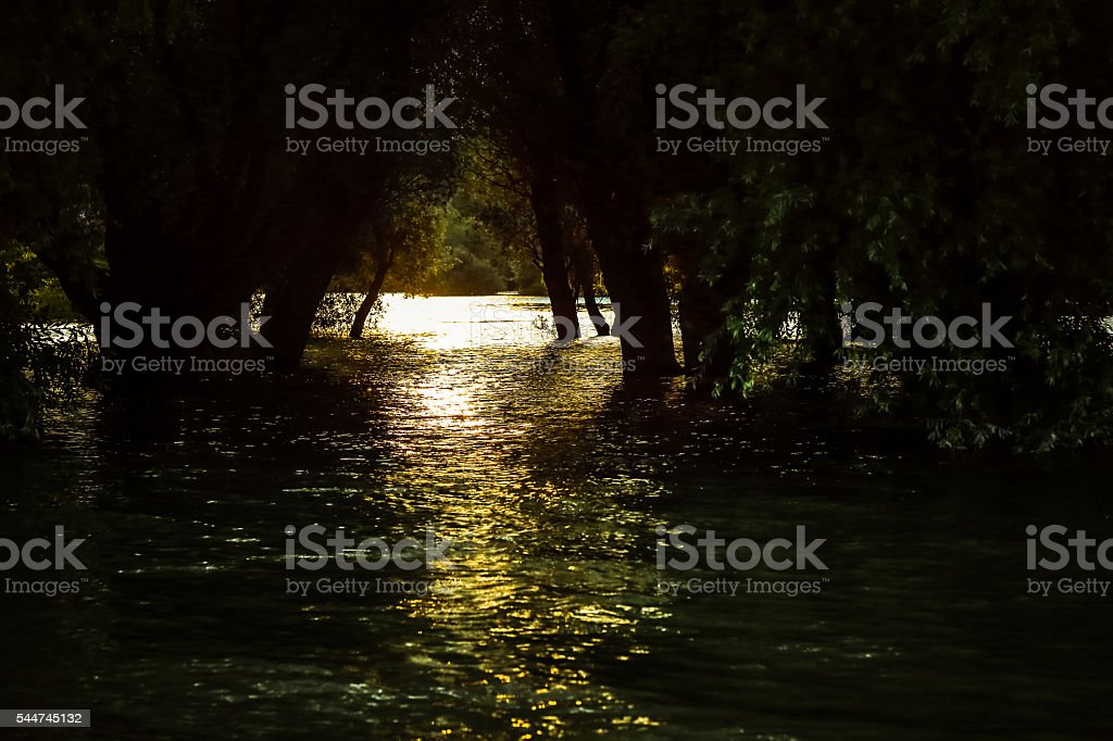 Dusk over vast Danube river surface and flooded willow forest stock photo