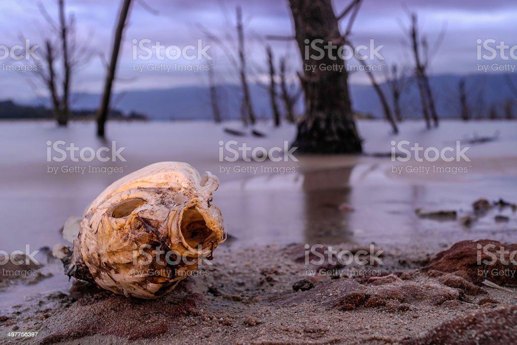 Dusk photograph of a dead fish stock photo