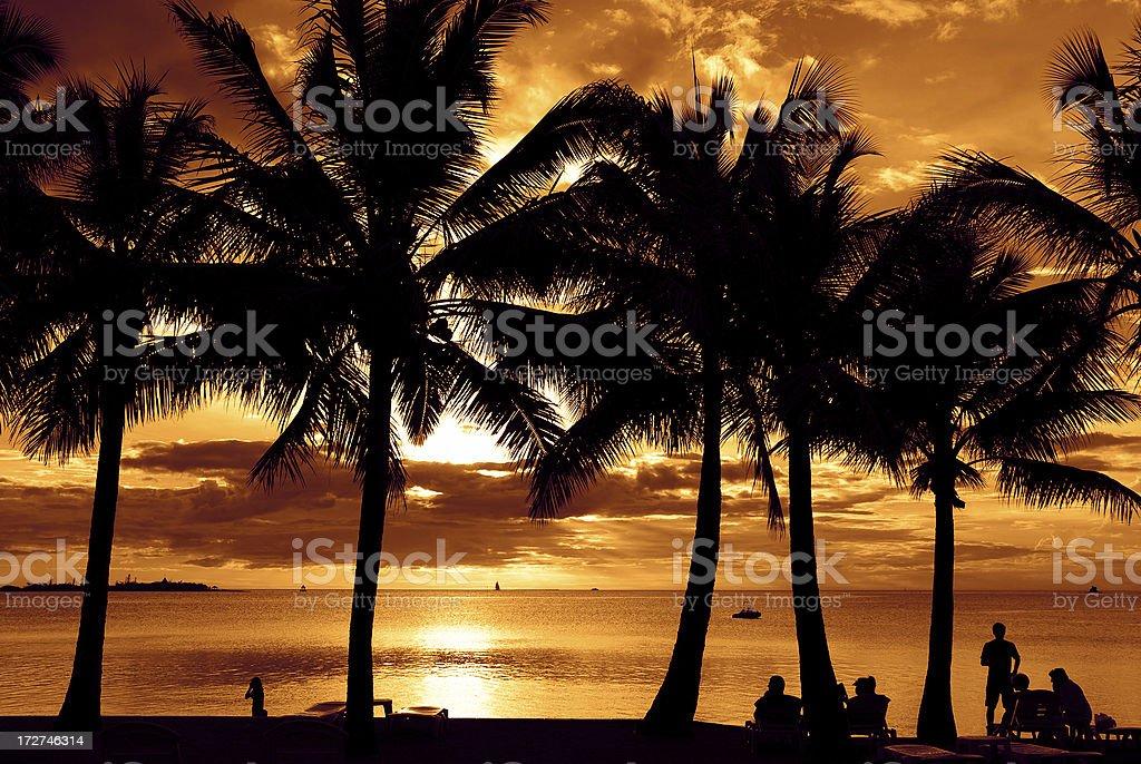 Dusk Sunset Palms at Noumea stock photo