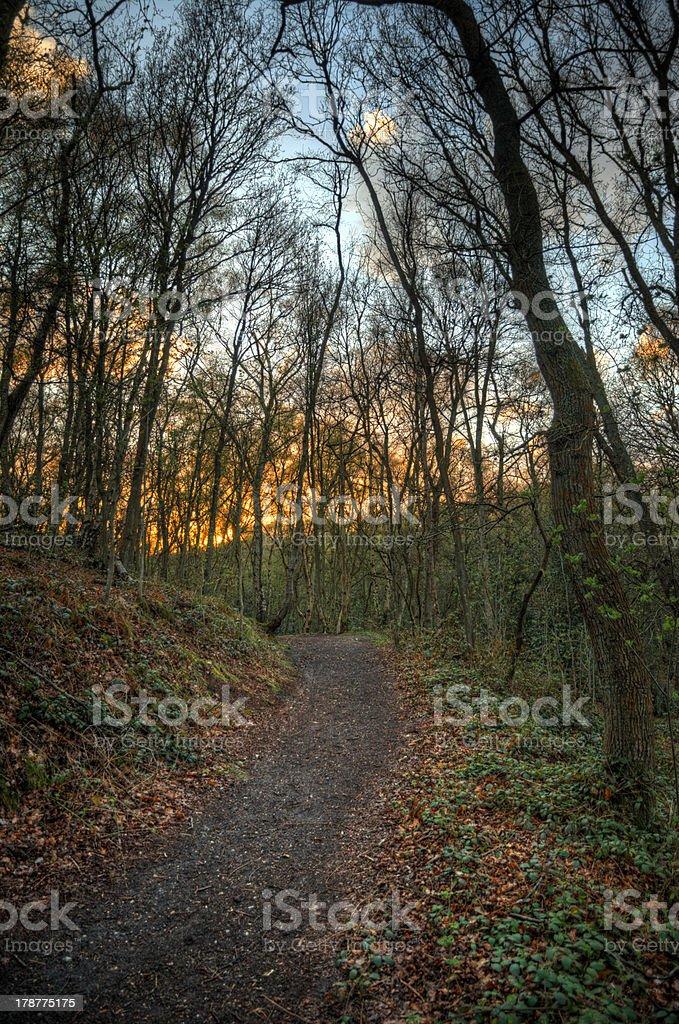 Sentier de la forêt au coucher du soleil photo libre de droits