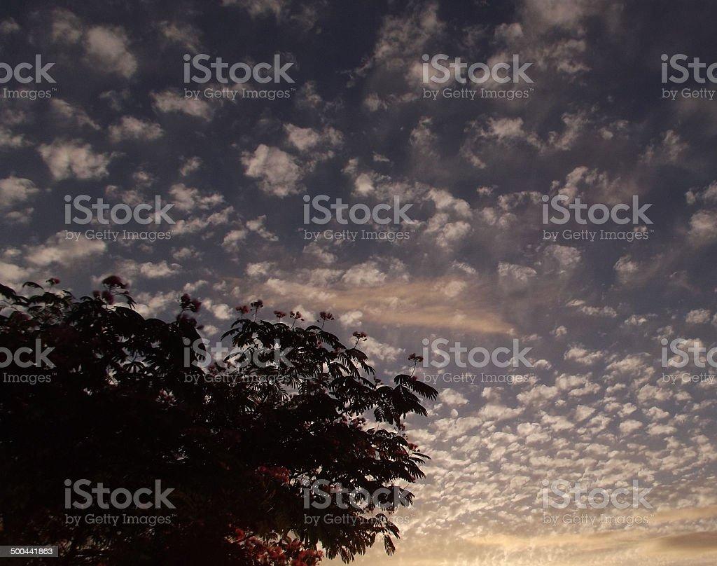 Dusky Mackerel Sky royalty-free stock photo