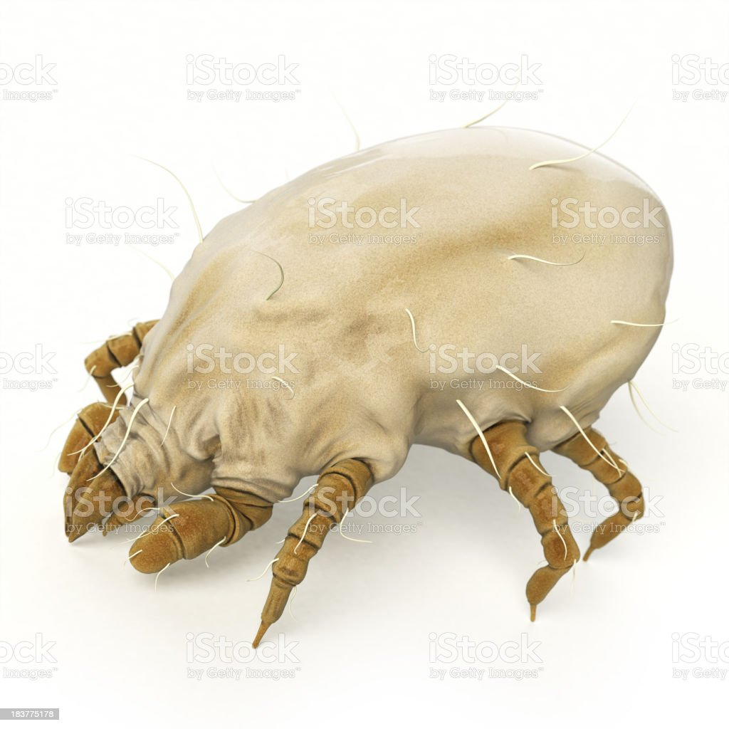 Dust Mite royalty-free stock photo