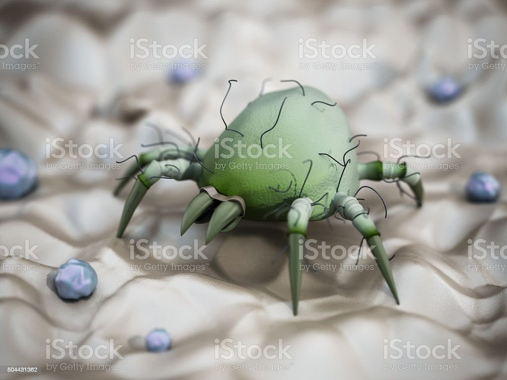 Dust mite stock photo