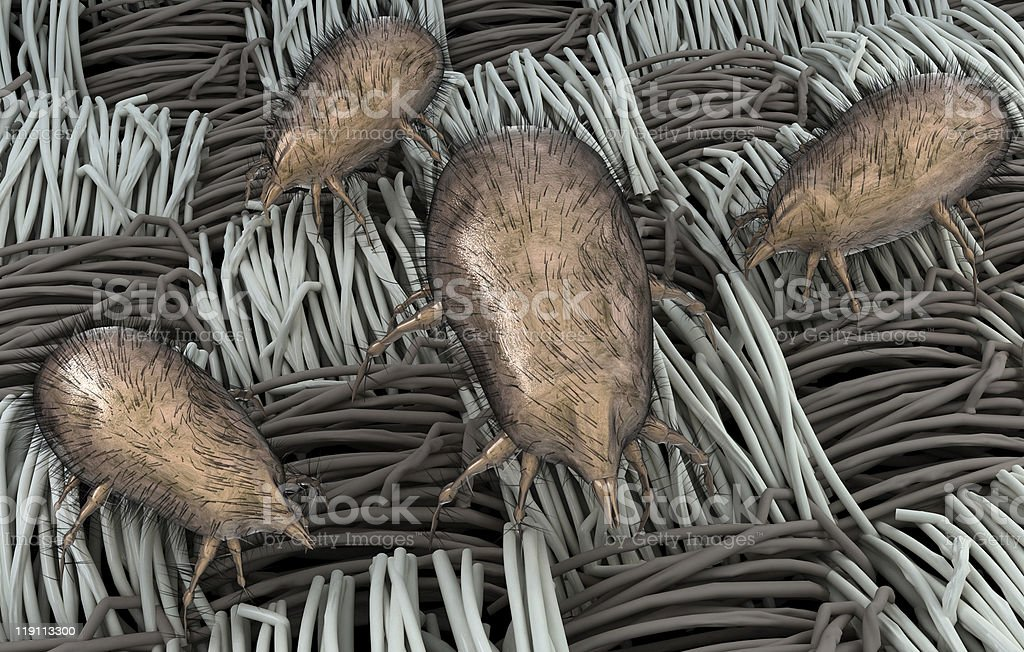 Dust Mites on Fabric stock photo