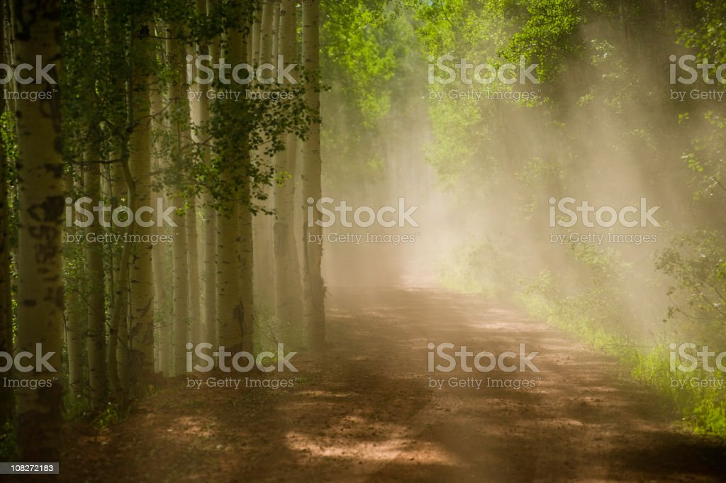 Dusty Dirt Road Through Aspen Forest royalty-free stock photo