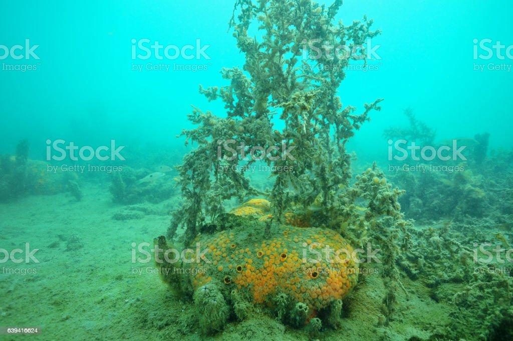 Dusty orange sponge stock photo