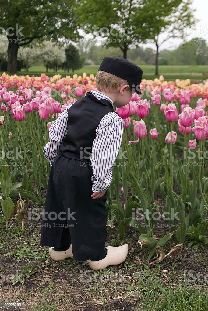 Dutch Boy Smelling Tulips royalty-free stock photo