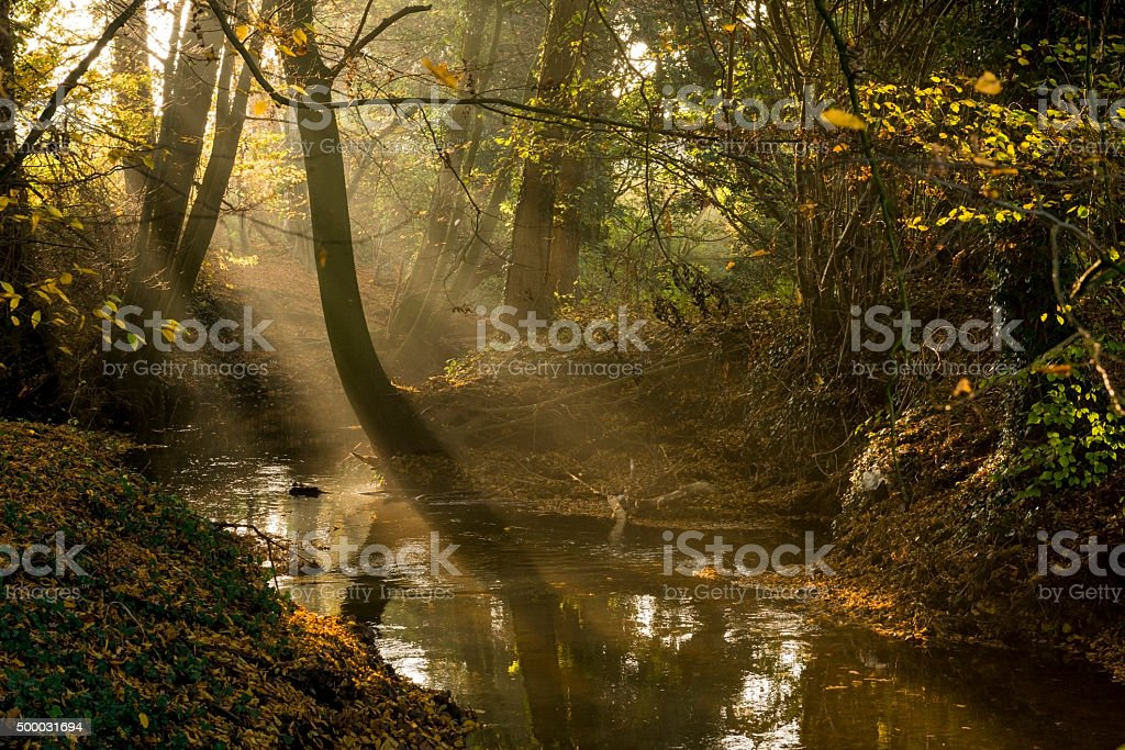 Dutch brook in the autumn afternoon sun. stock photo