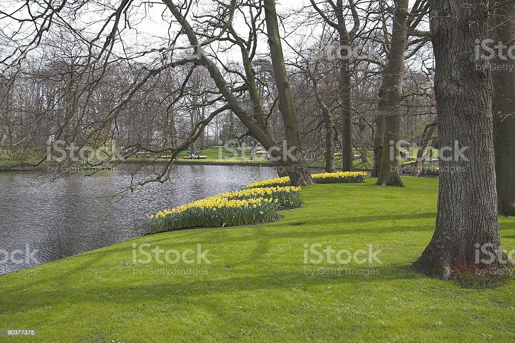 Dutch bulbs royalty-free stock photo