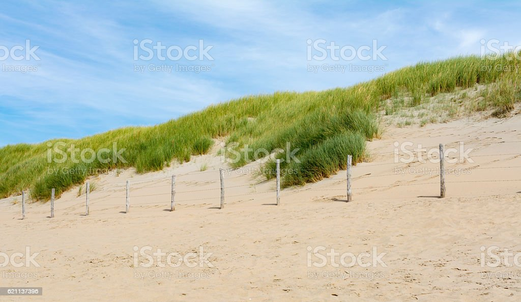 Dutch dunes with  marram grass with barb wire fence stock photo