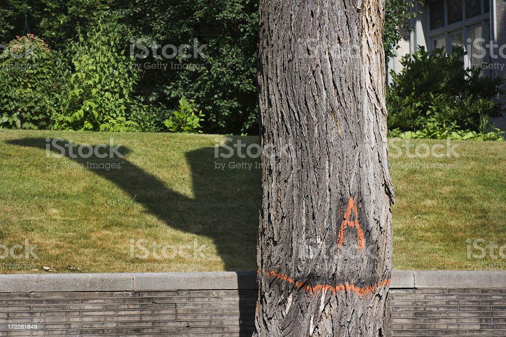Dutch Elm Disease royalty-free stock photo
